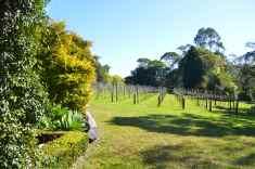 Vines at Witches' Falls Winery, Tamborine