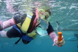 Snorkelling it up in the Great Barrier Reef