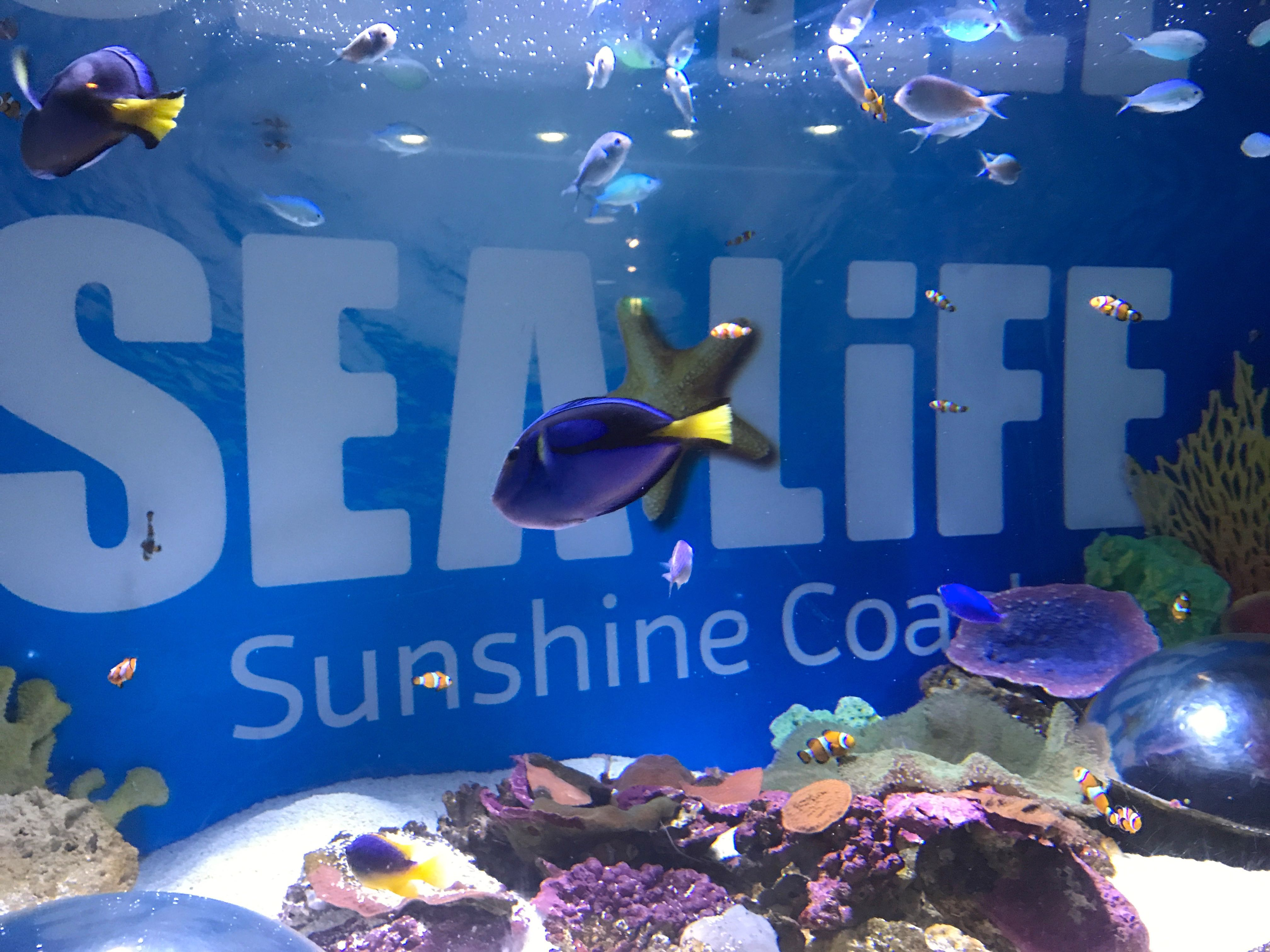 Mooloolaba Sea life…Underwater World