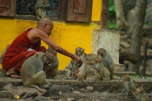 Monk Feeding Monkeys