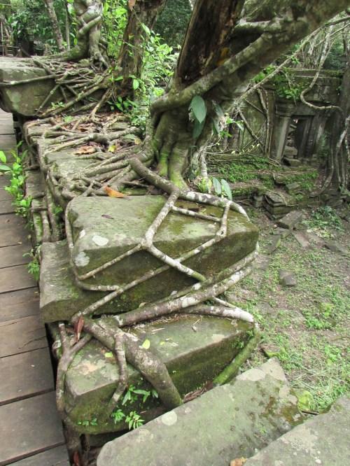 Bang Melea Tree Roots2
