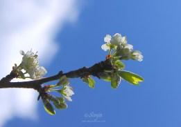 Plumtree 5127CropEdit 2013.05.09Blog