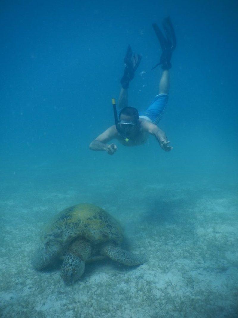Snorkelling with turtles at Perhentian Besar Turtle Beach