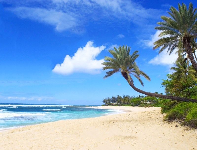 discover what to see and do in Honolulu, Paradise Island of Hawaii! north shore beach