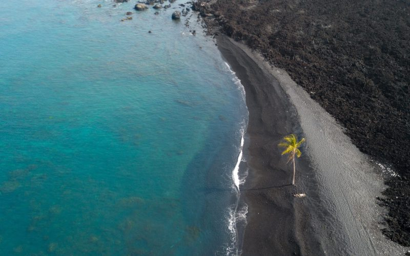 aerial view of black beach with lone palm tree