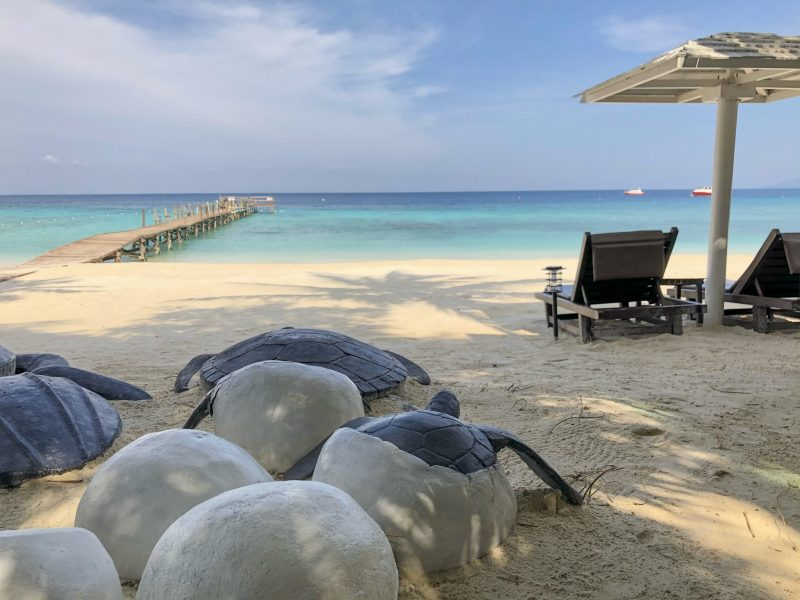 ceramic turtles coming out of eggshells heading towards the sea in lang tengah with two sun loungers and parasol