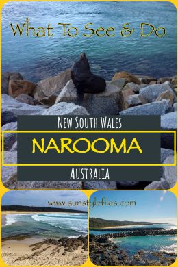 What to do in Narooma - www.sunstylefiles.com - #australia #seals #marinelife #newsouthwales #beaches #travelguide #narooma #australiabeach #downunder