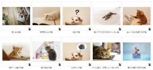 写真AC猫