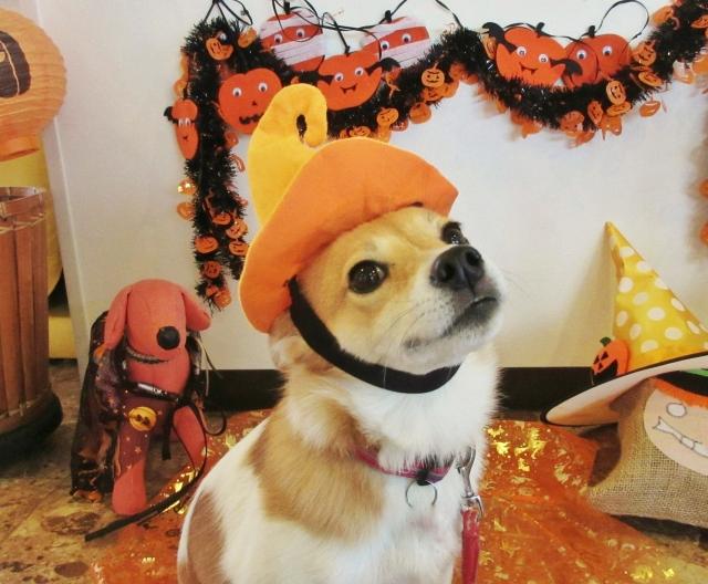ハロウィンの仮装をした犬