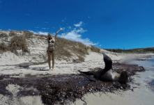 Copying a seal on the beach with its flippers open waving at the camera