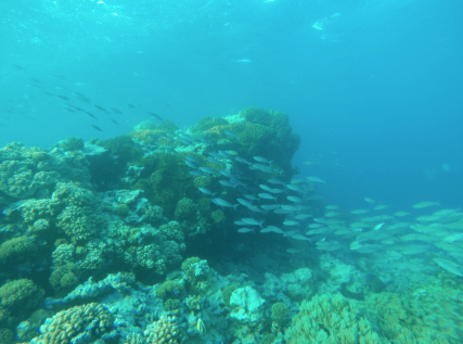 Colourful fish swimming through coral