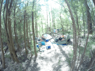 Camping ground nestled amongst the trees in Pemberton