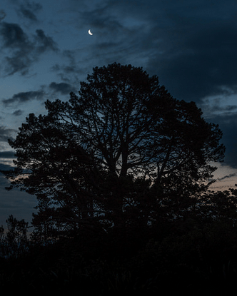Night ascending at Pyes Pa, a big tree with a crescent moon behind it, grey clouds rolling in