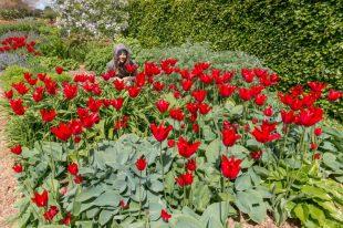 Tegan hiding amongst bright red flowers in a park in Dublin