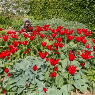 Tegan hiding amongst bright red flowers in a park in Dublin