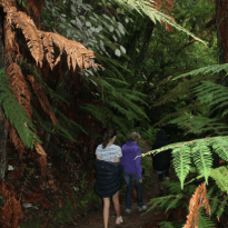 Walking through the bushes in the Abel Tasman National Park, engulfed by green ferns
