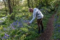 Dan going in to pick a bluebell, sunlight streaming through behind him