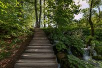Wooden footpath through the green trees as the sunlight streams through