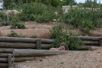 Tegan hiding in the trenches pretending to shoot a gun