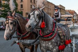 2 horses side by side with red and black horse gear
