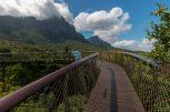 Sky bridge walk in Kirstenboch