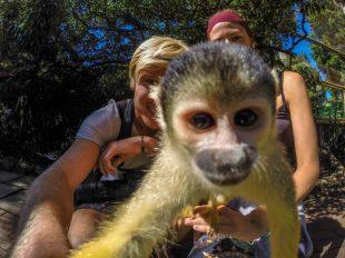 Monkey taking a selfie