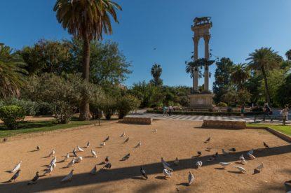 Birds on the sand inside a park