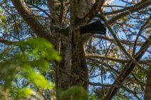 Lorrie sitting in a tree