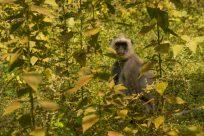Monkey in the bush