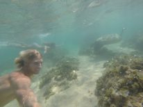Us swimming with turtles