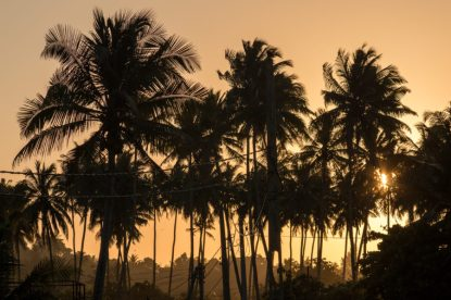Palm trees in the foreground, orange sky with the sunset in the background