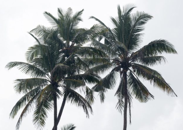 Rain pouring down, palm trees behind