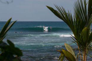 Dan surfing