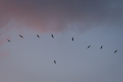 Birds flying in a line across a purple cloudy sky