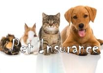 ביטוח חיות המחמד הטוב ביותר