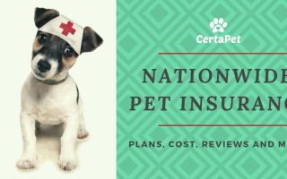 Nation-wide Pet Insurance-Key Information You Need to Know