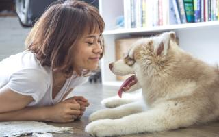 Advantages of Nationwide Pet Insurance: