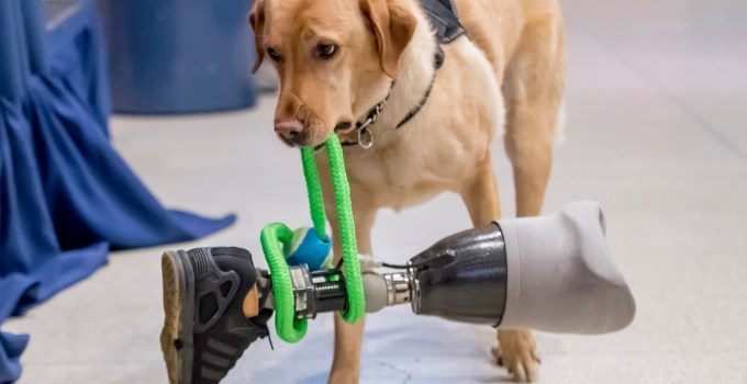 Service Dog Insurance You'd love to Get