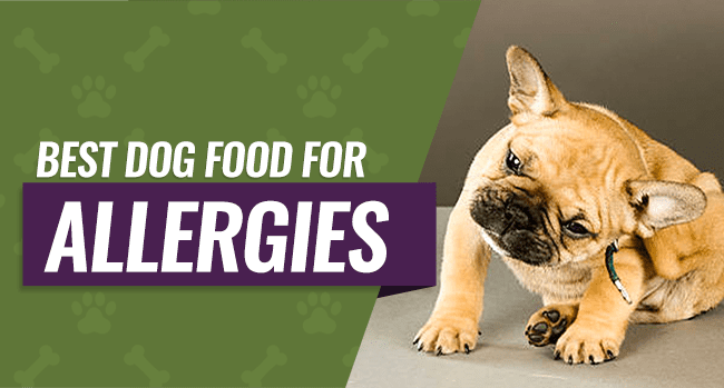 The 5 Best Dog Foods For Allergies (2020) Review