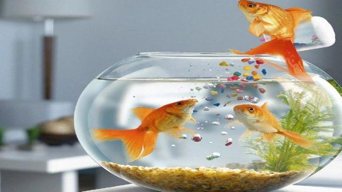 Petsmart Fish Return Policy