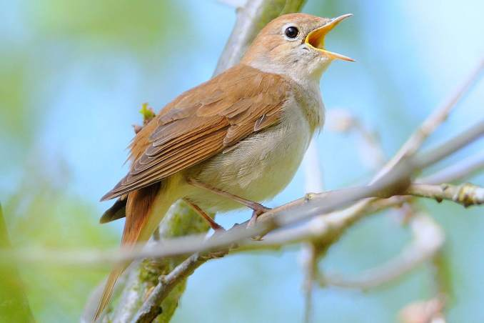 Spiritual Meaning of a Bird Chirping