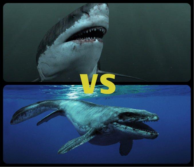 Megalodon vs Blue Whale Size