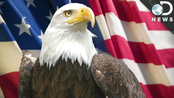 US Symbol National Bird – Bald Eagle