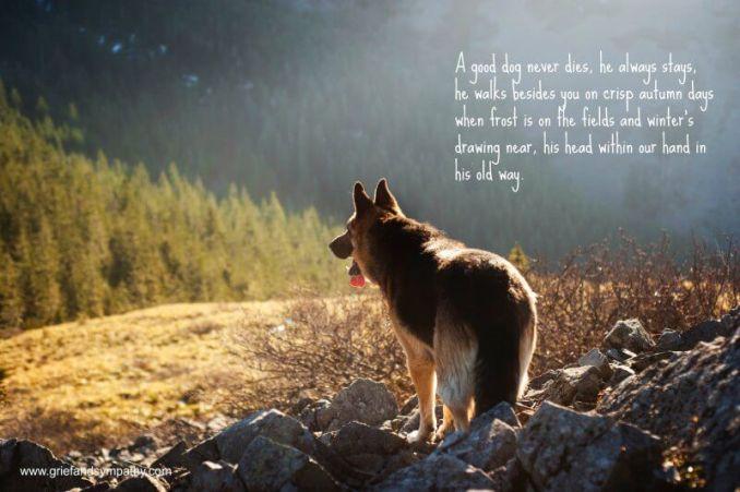 loss of pet poetry