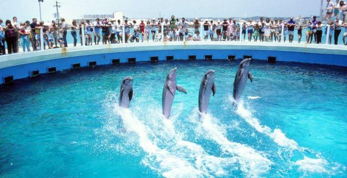 Gulfarium Marine Adventure Park Destin Florida