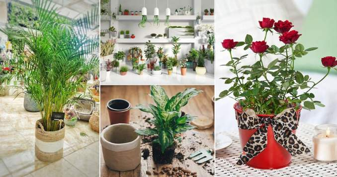 cheap and free plants and Flowers