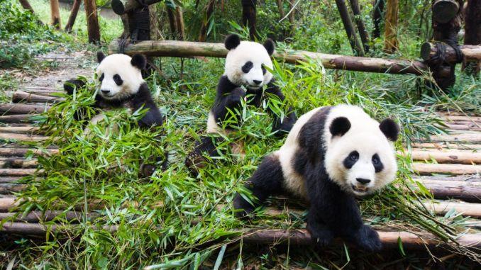najbolji zoološki vrtovi u SAD -u