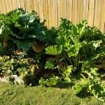 Our Gardening Secrets