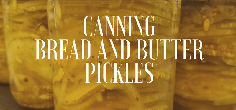 Canning Bread and Butter Pickles