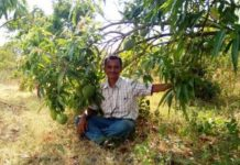 .engineer-grafts-51-types-of-mango-on-one-tree